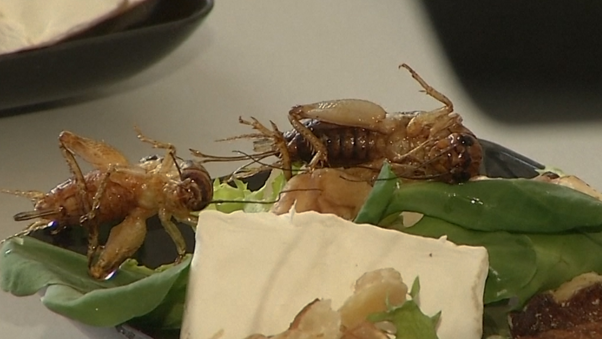 Cricket salad: one way scientists are trying to make insects more appetizing.