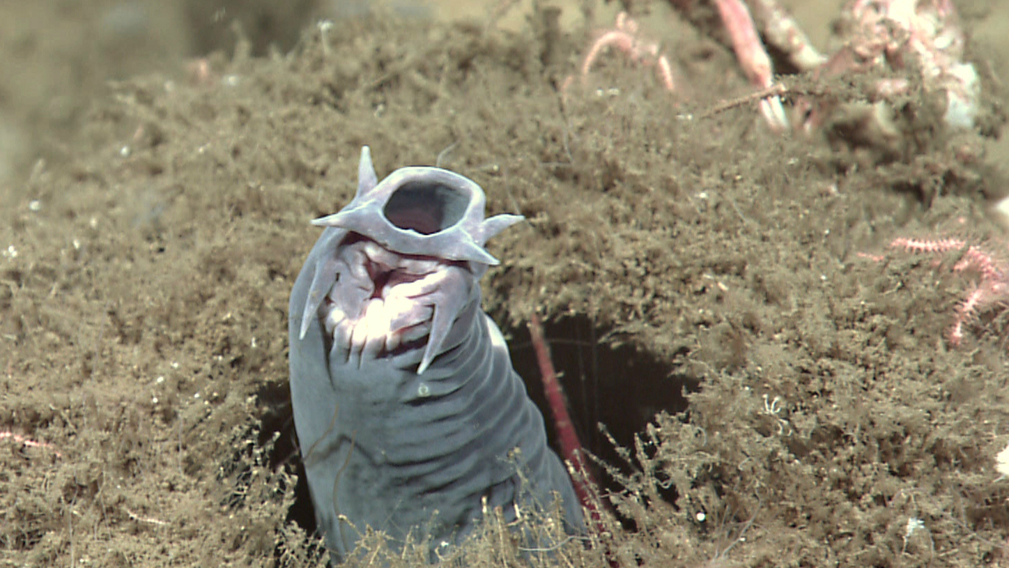 The hagfish highway crash is a reminder of a centuries-old mystery ... for Hagfish Accident  156eri