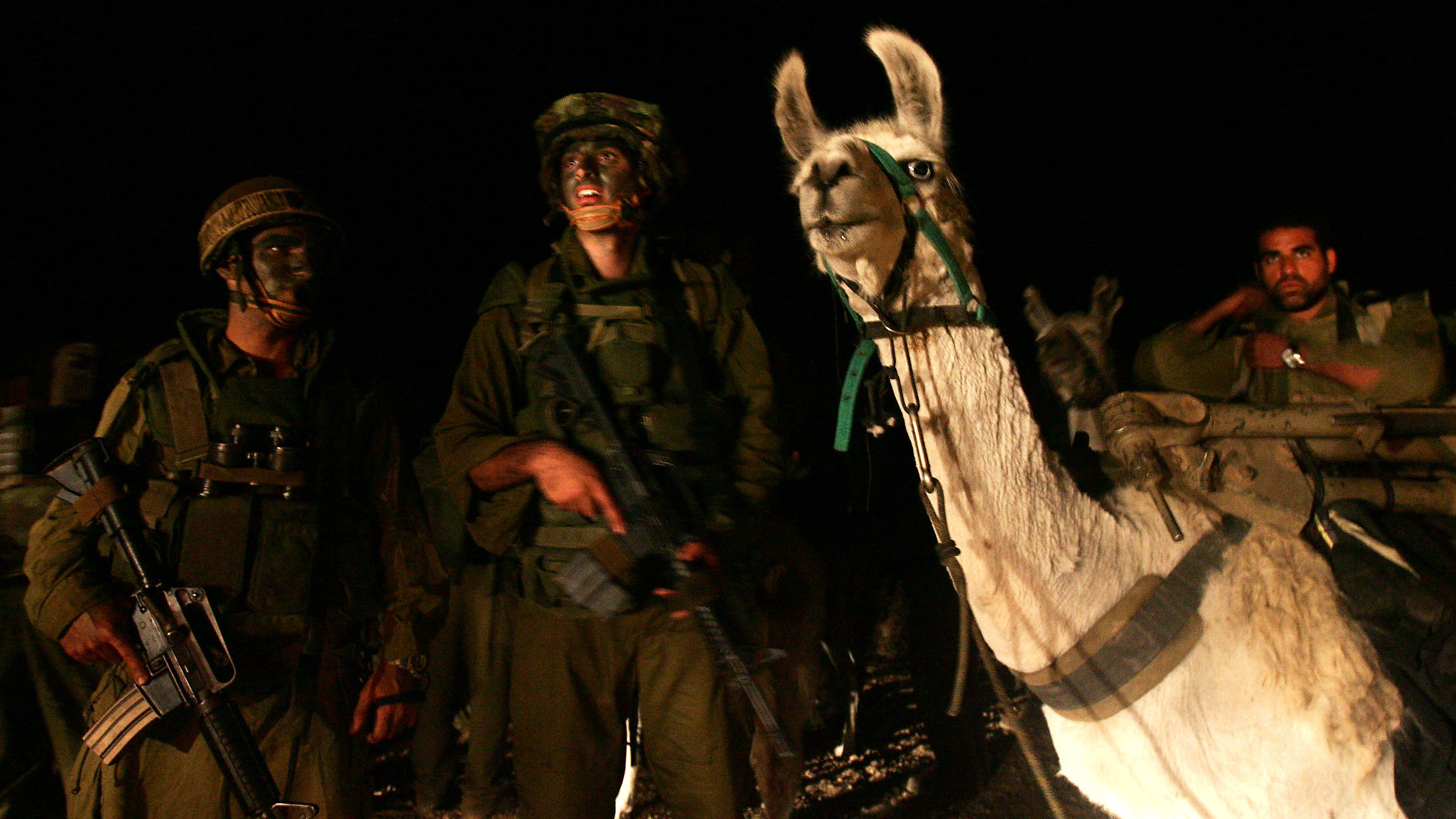 Israeli special forces with their llamas wait to cross the Israel-Lebanon border, late August 1, 2006. REUTERS/Ronen Zvulun (ISRAEL) - RTR1G0BZ