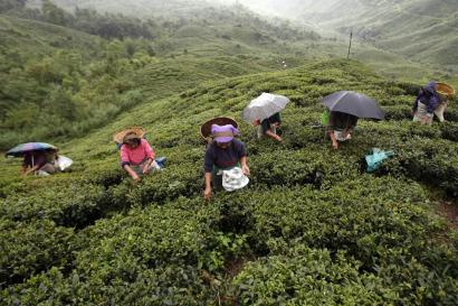 India-Darjeeling