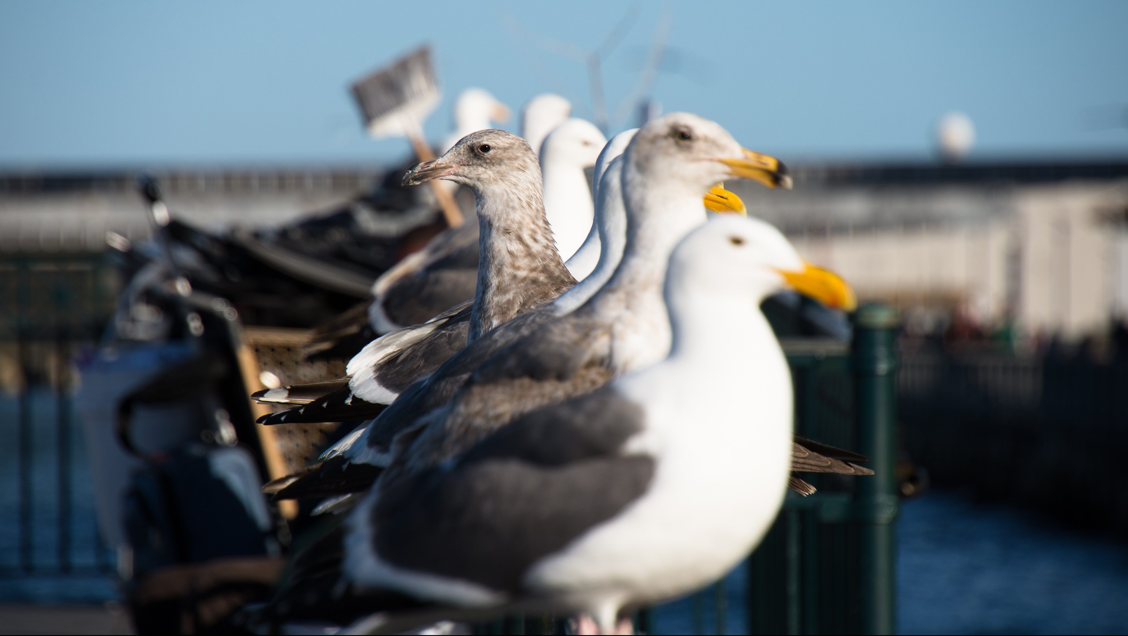 The gulls are alright: How a lesbian seagull discovery shook