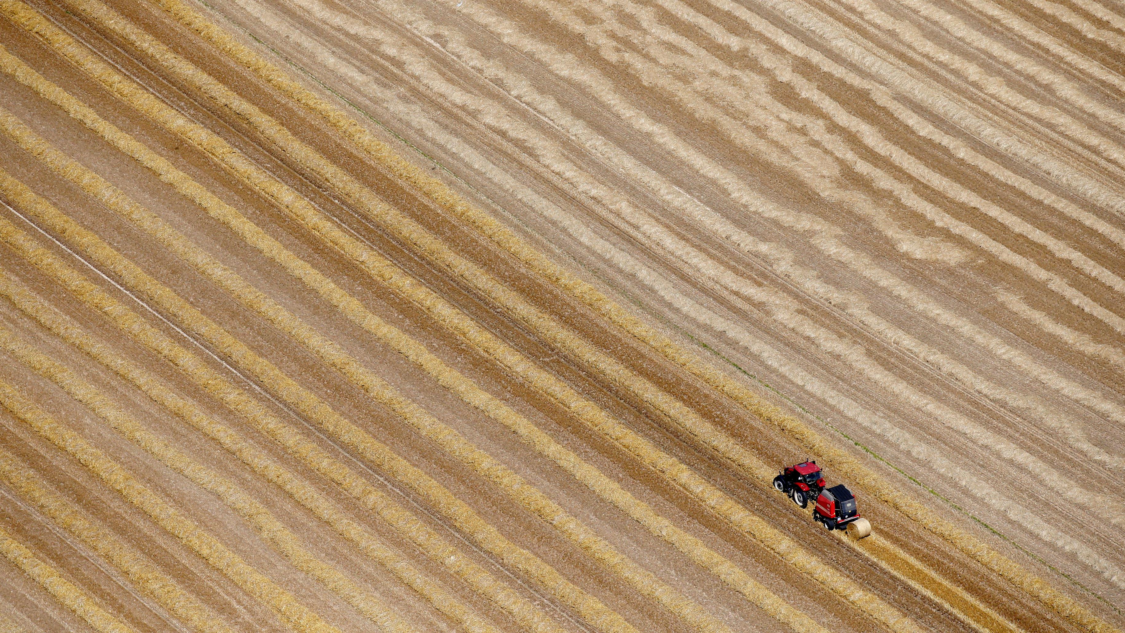 The future of wheat futures.