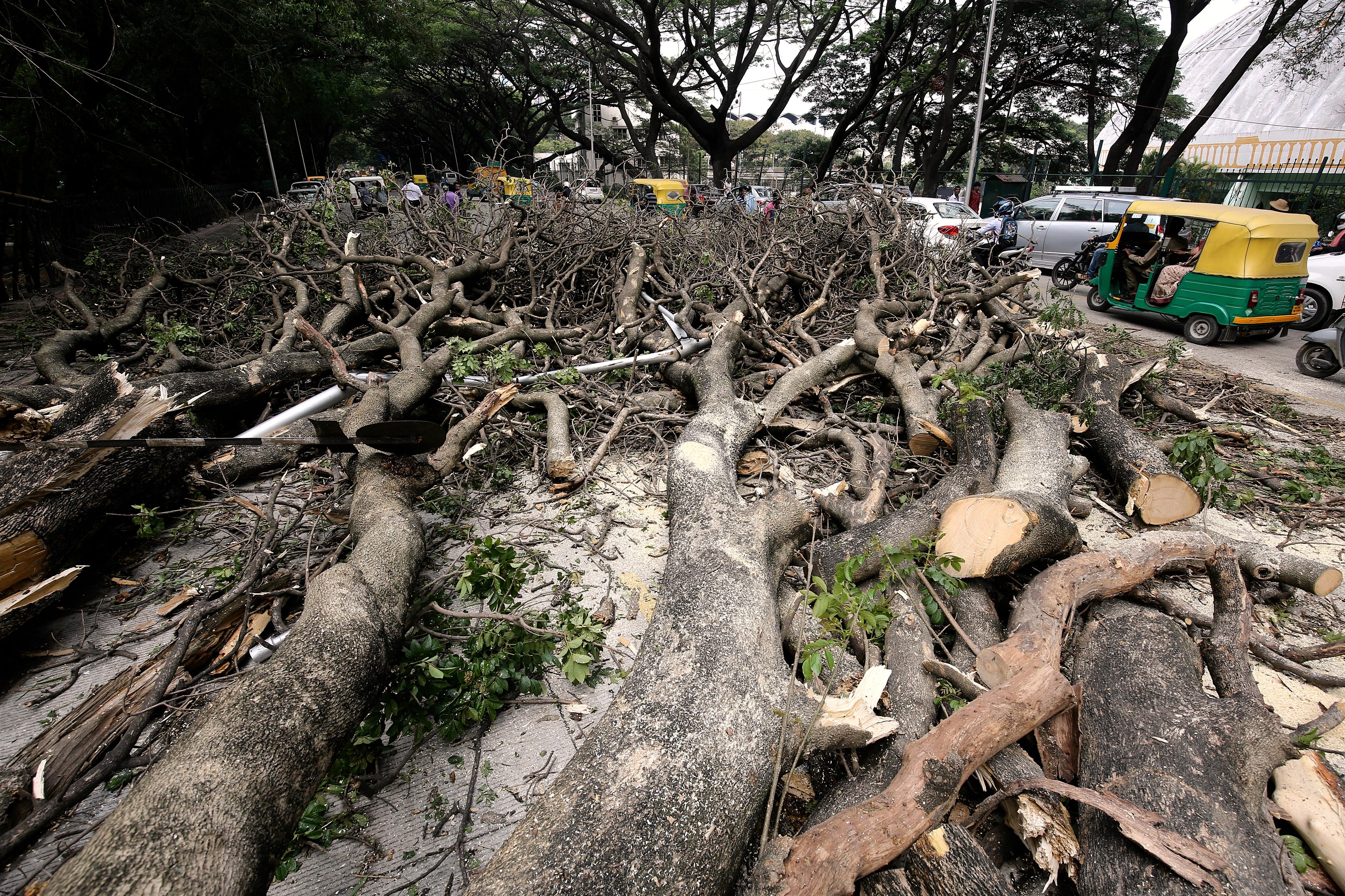 India-Bangalore-Trees