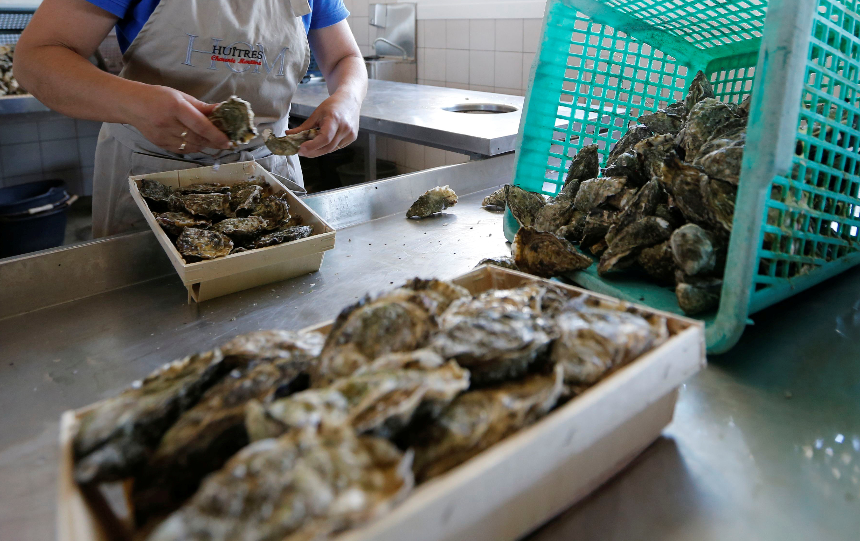 A worker prepares oysters for the automatic oyster vending machine at l'huitriere de Re in Ars en Re on the Re Island, Southwestern France