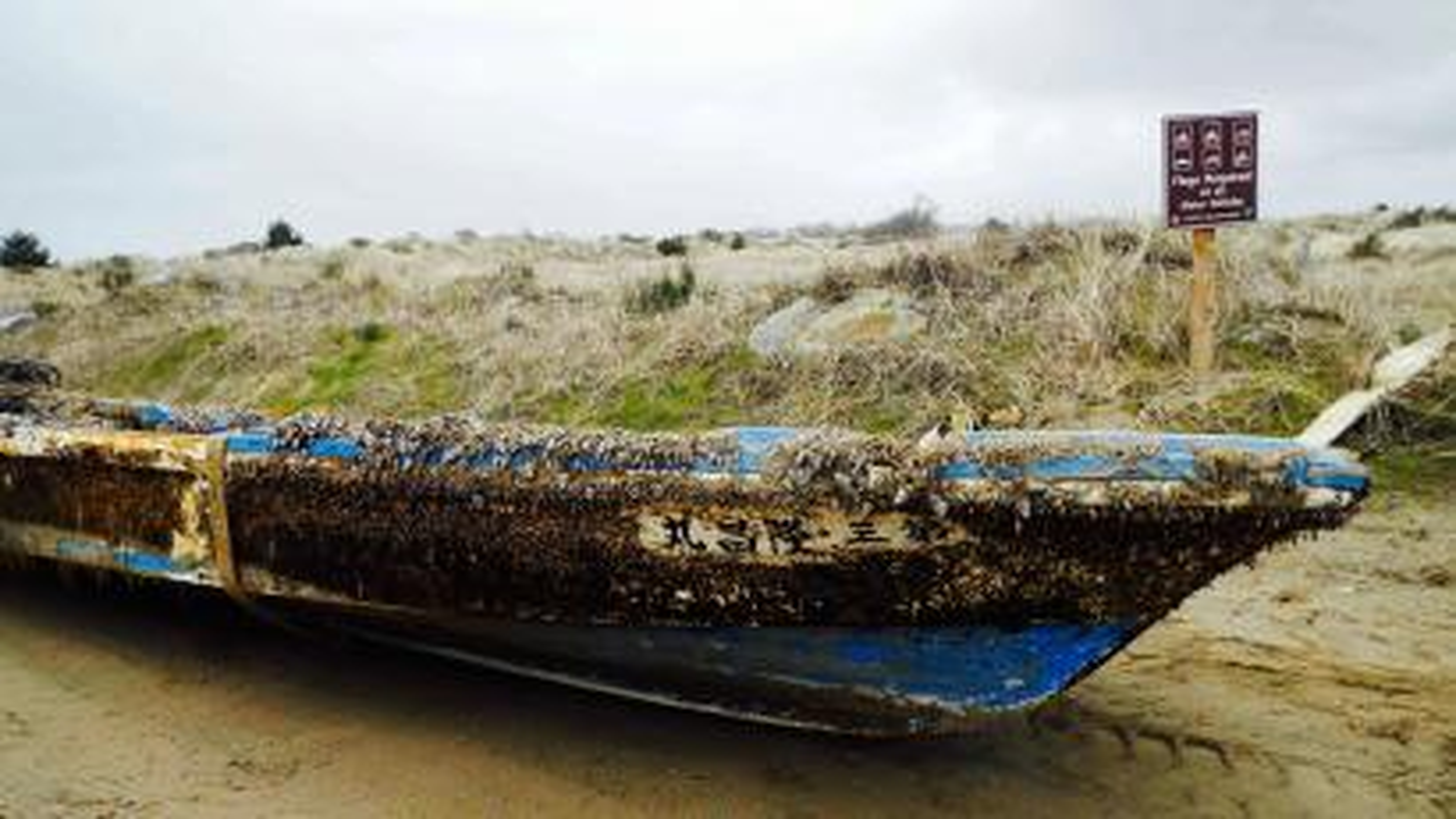 Barnacle boat.