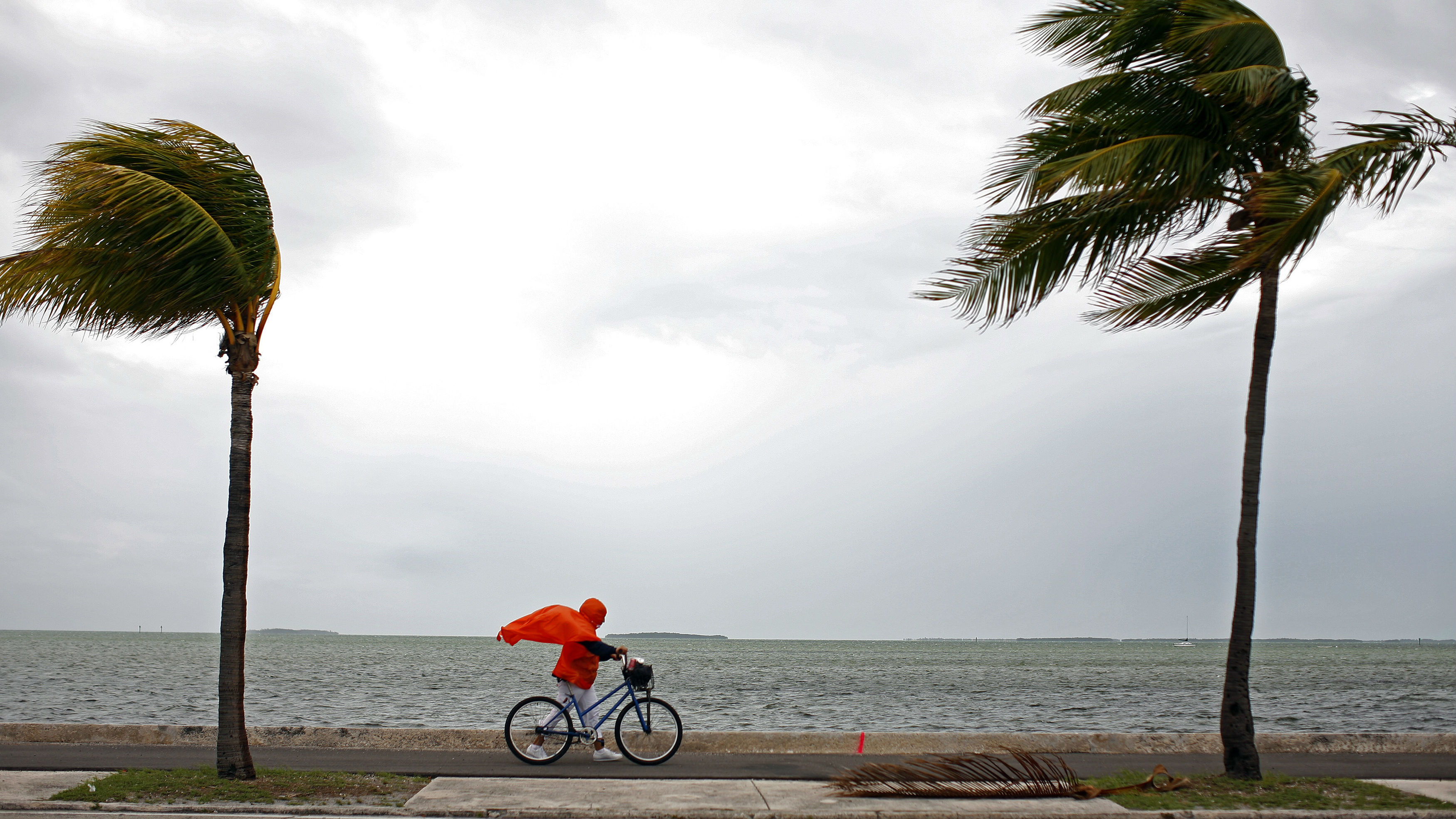 A woman rides a bike in between two palm trees.