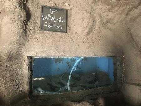 Most of the aquatic life has not been been sustained at the Fish Garden in Cairo