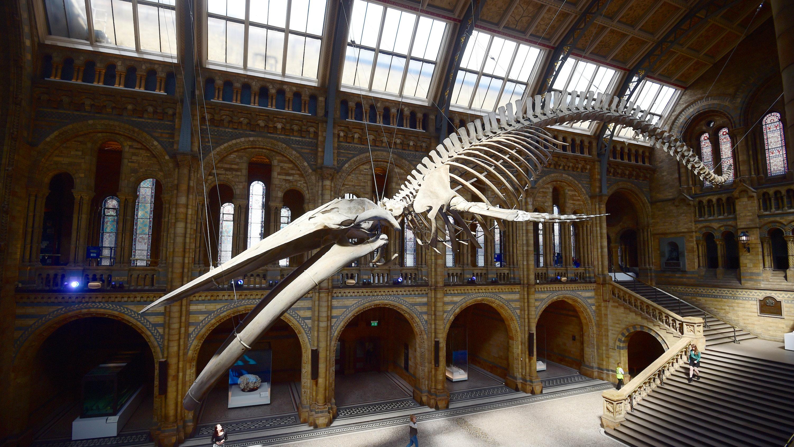 natural history museum1