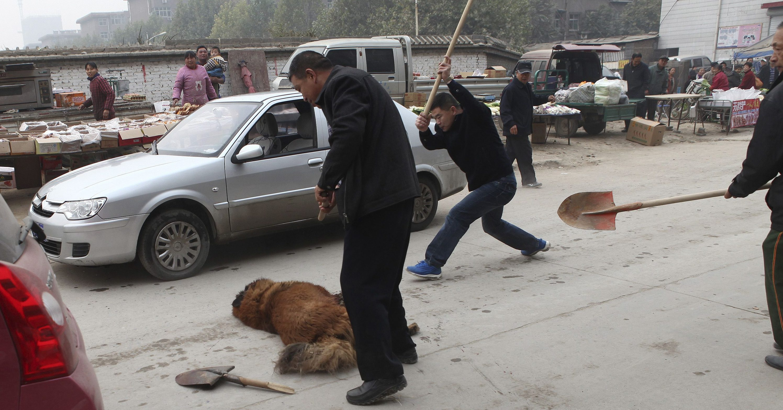 Security guards beat a Tibetan mastiff with shovels after it and another Tibetan mastiff attacked and injured several people, at a residential compound in Shijiazhuang, Hebei province October 30, 2013. The two dogs were restrained by more than 40 security guards and 20 police officers on Wednesday morning. Several gunshots were fired in the incident that lasted 30 minutes, according to local media. The dog in this picture was taken alive by the authorities while the other dog died after being shot by police and beaten by security guards. Picture taken October 30, 2013.