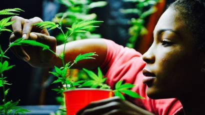 A women at an LA dispensary tending cannabis plants.