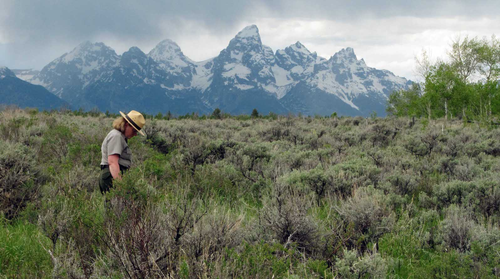 Grand Teton National Park spokeswoman Jackie Skaggs strolls across a square-mile section of state land in the park. Wyoming is threatening to auction off the land if the federal government doesn't agree to trade land, minerals or mineral royalties for the property. (AP Photo/Mead Gruver)