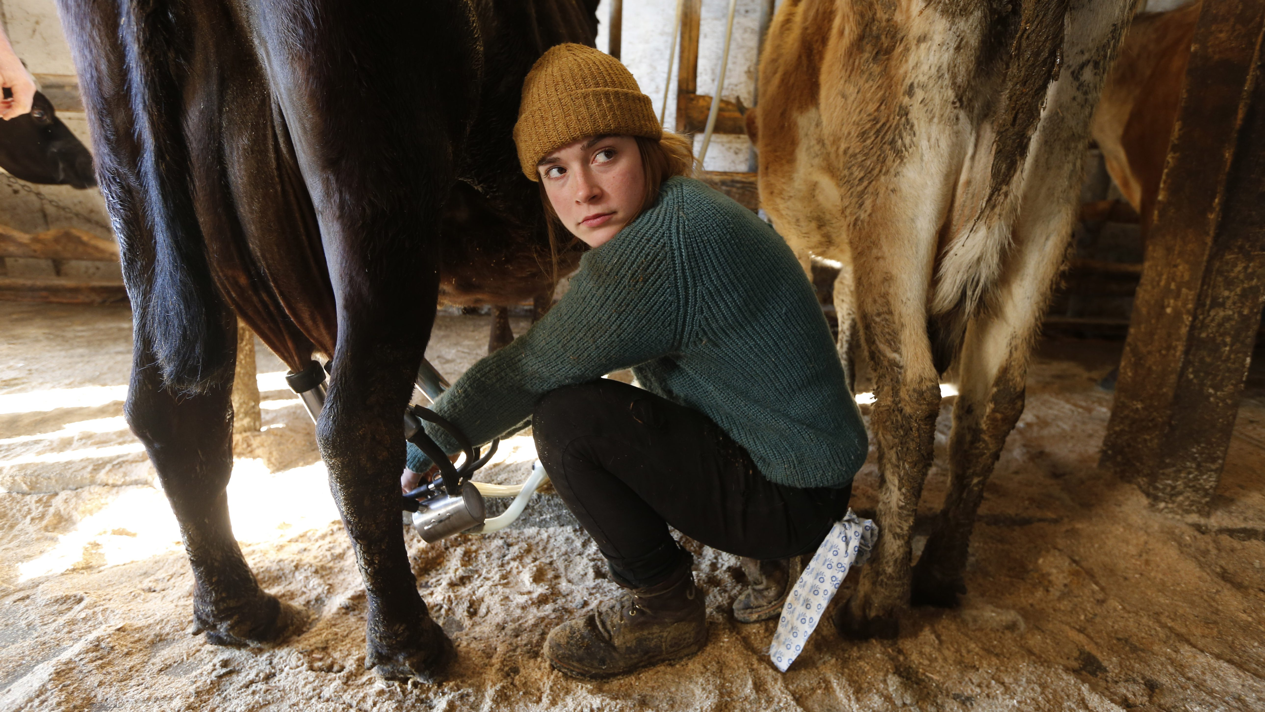 In this Tuesday, March 31, 2015 photo, Jade Ouimette, 21, milks cows at the Straw Farm in Newcastle, Maine. The state's dairy farmers are divided over a potential vote this week on a statewide proposal that could change restrictions on raw milk sales. A bill would exempt some dairy farms from licensing requirements needed to sell raw milk direct to consumers. (AP Photo/Robert F. Bukaty)