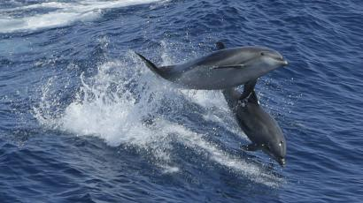 Two dolphins jumping out of a wave in the ocean.