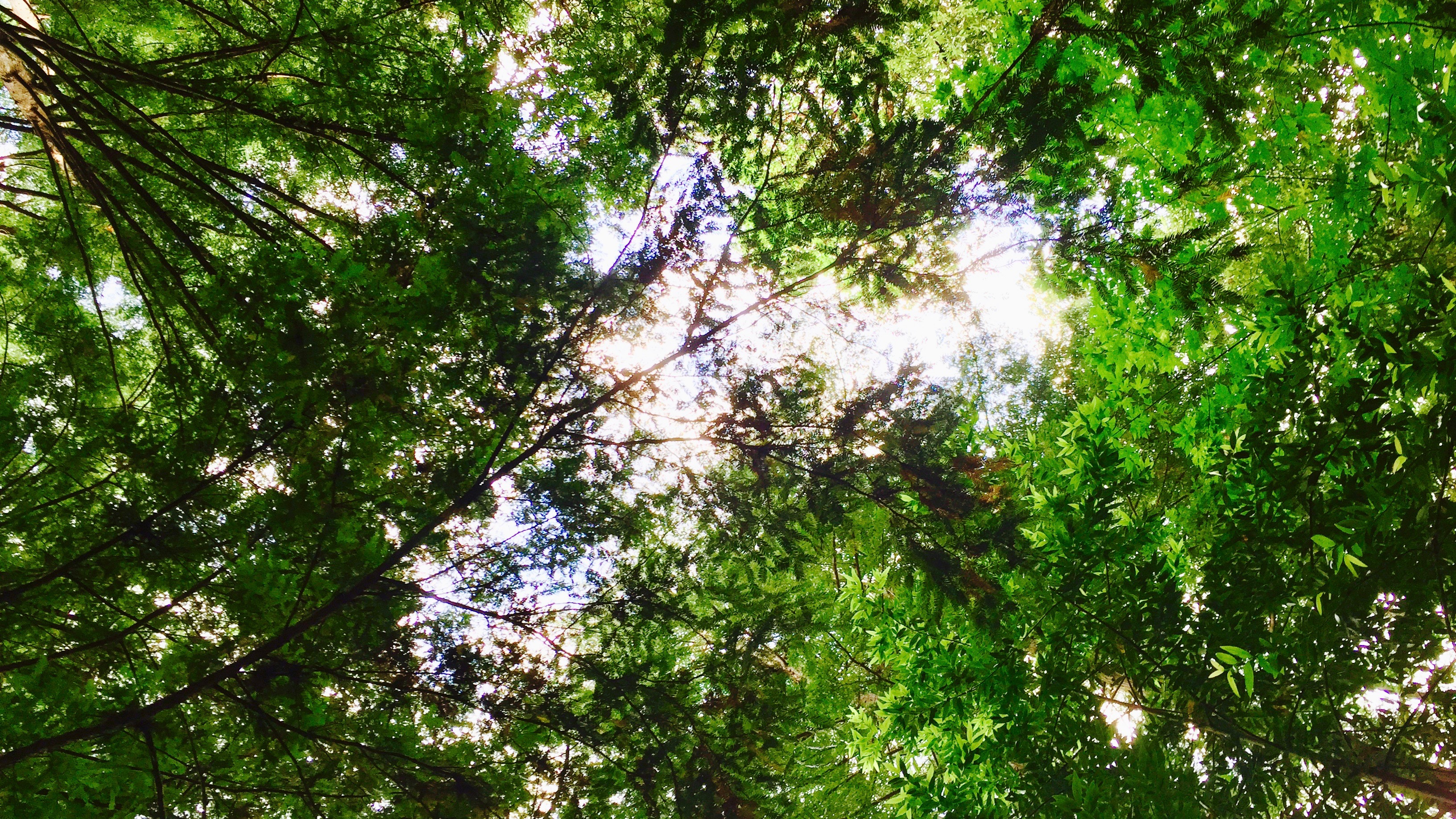 The Forest app cuts your phone dependence with an app that