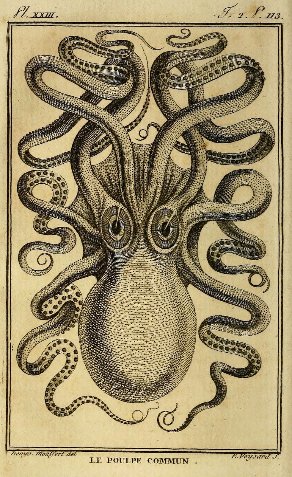 The common octopus as drawn by Denys Montfort, in the 1801 Histoire Naturelle, Générale et Particulière des Mollusques.