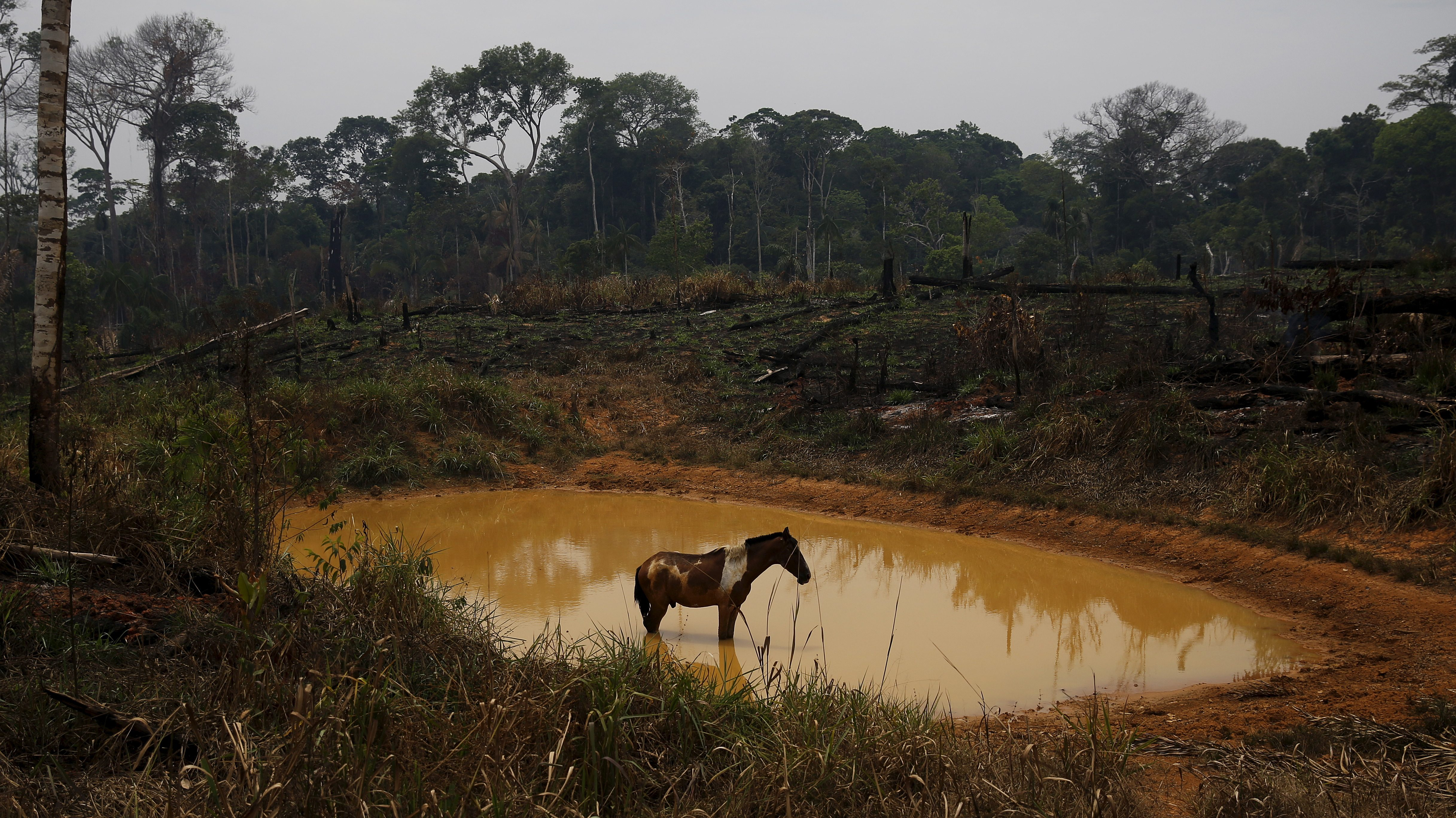 A horse stands by a lake in the Brazilian rainforest.