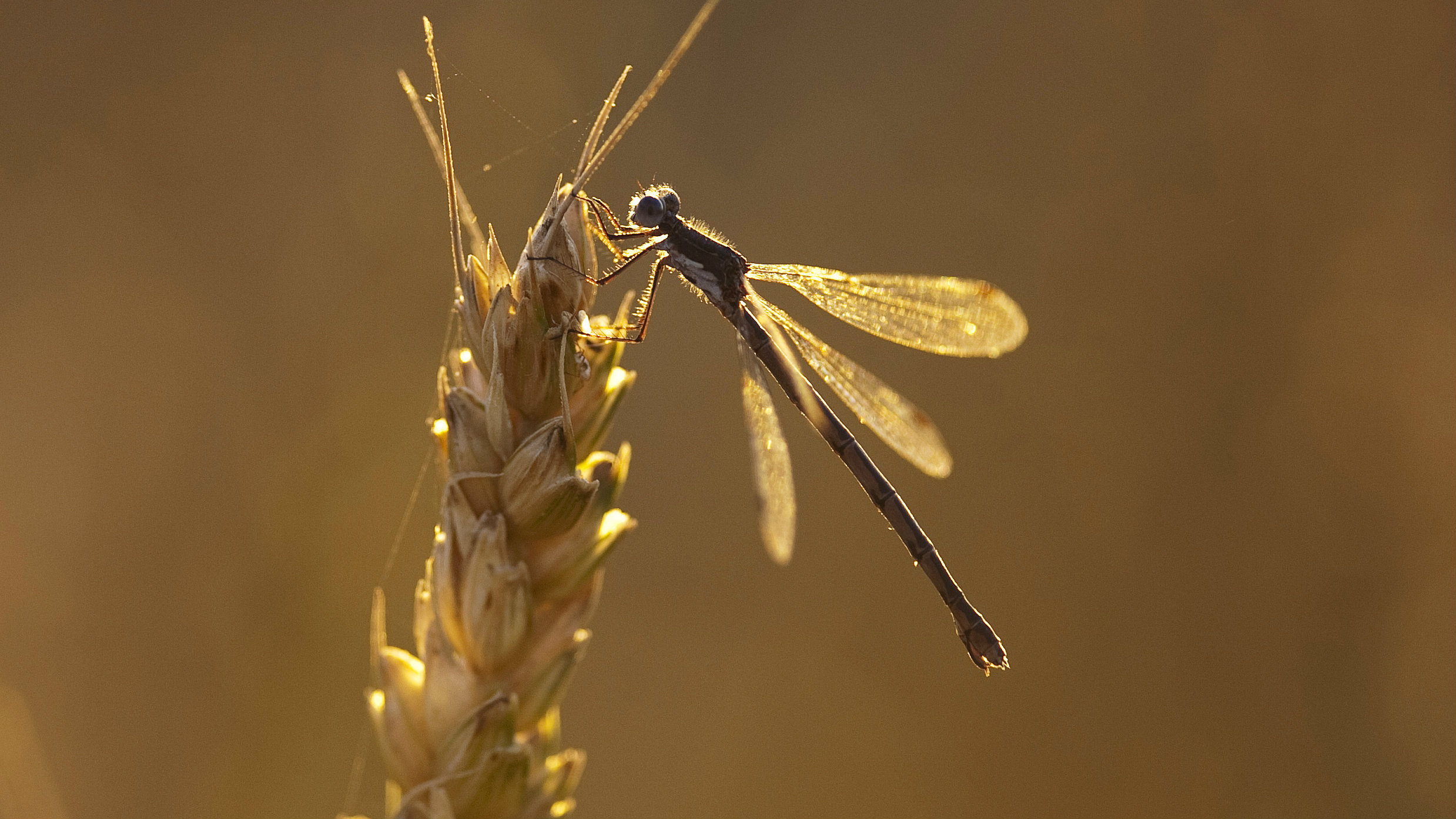 Insects are in serious trouble.