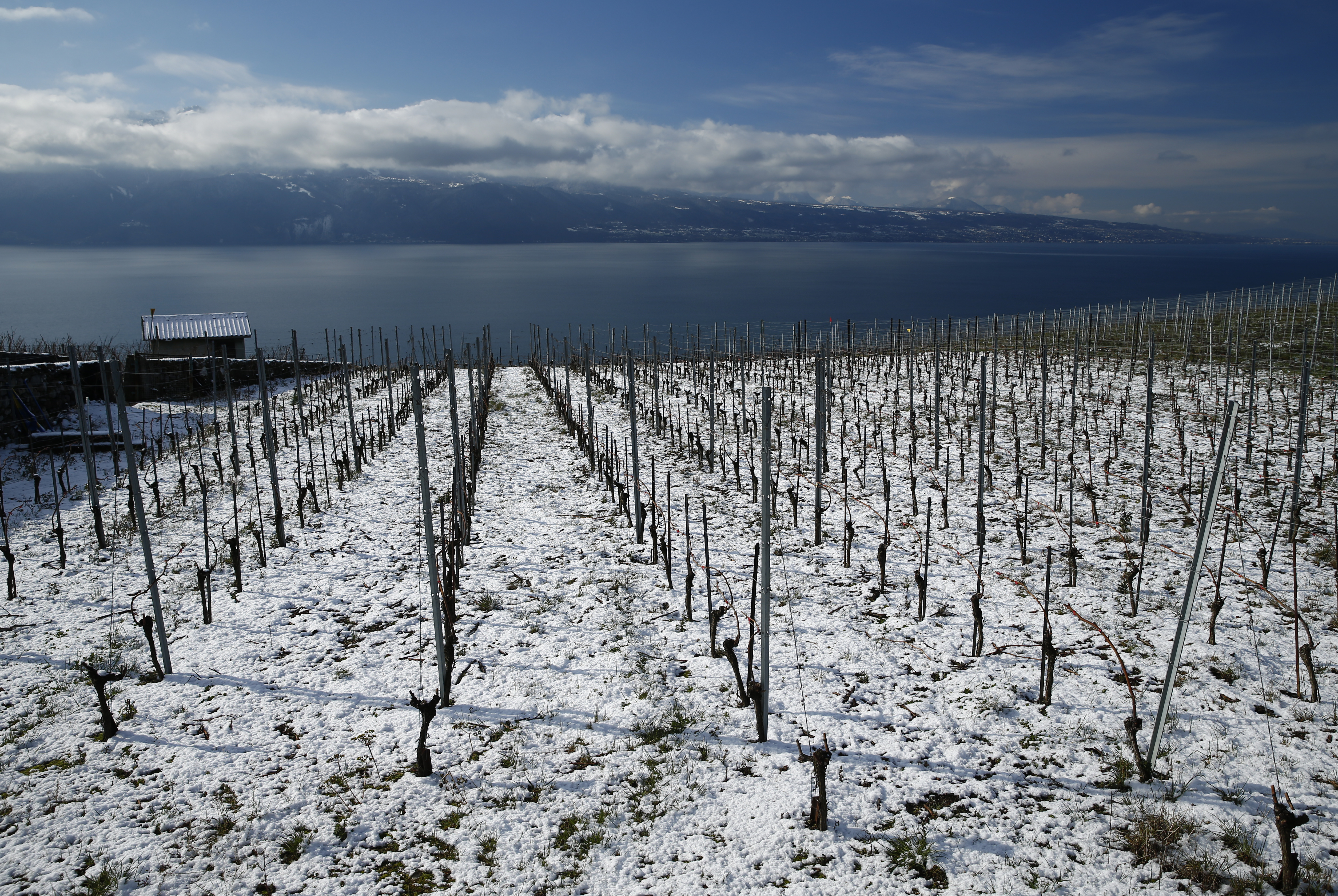 The vineyards of Lavaux are pictured overlooking Lake Leman after an overnight snowfall in Riex near Vevey
