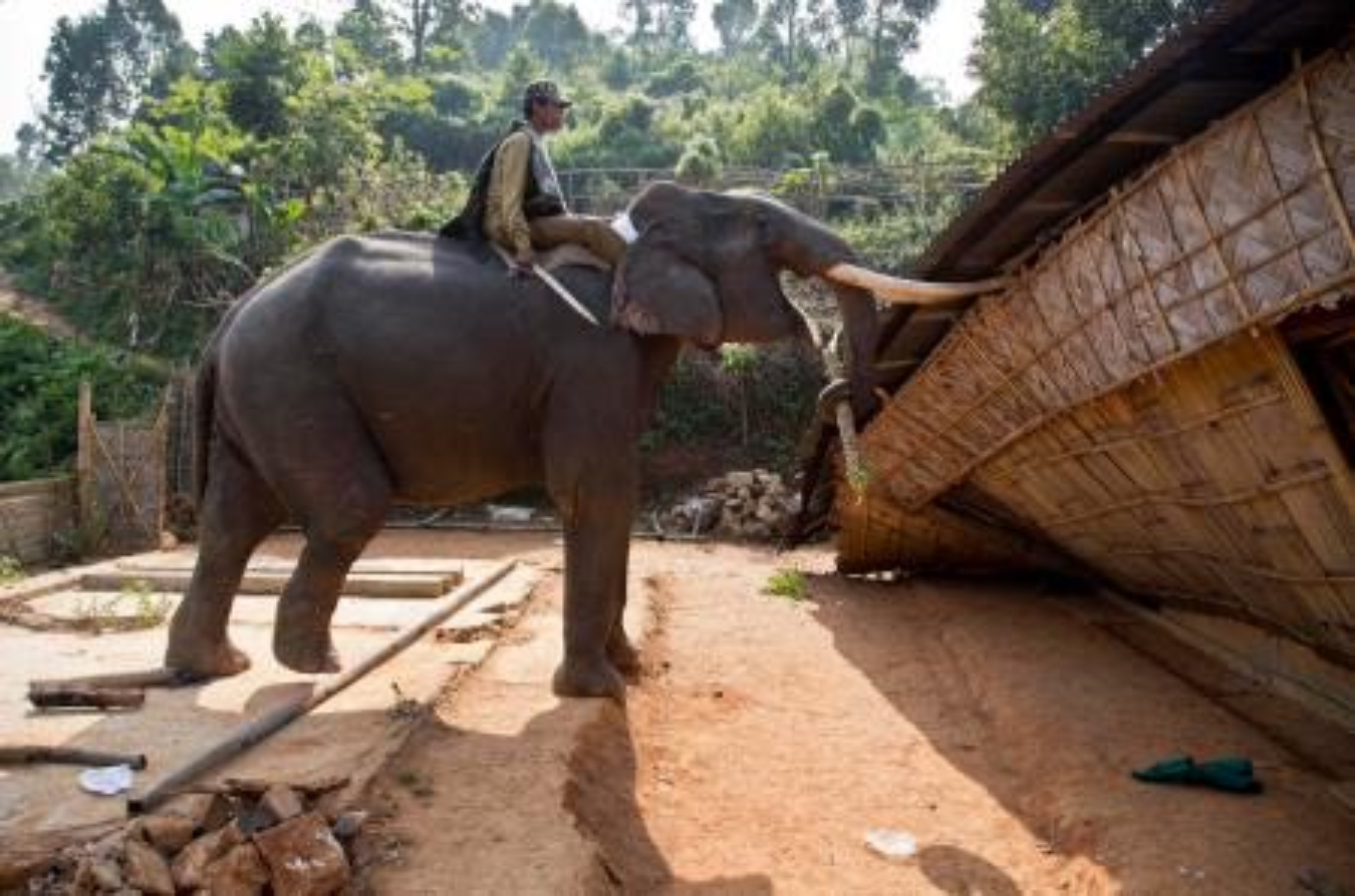 APTOPIX India Elephant Evictors