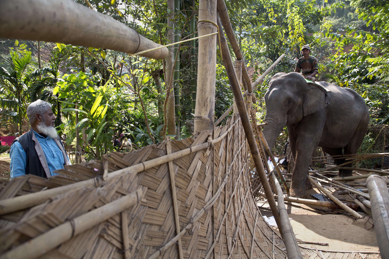 India Elephant Evictors