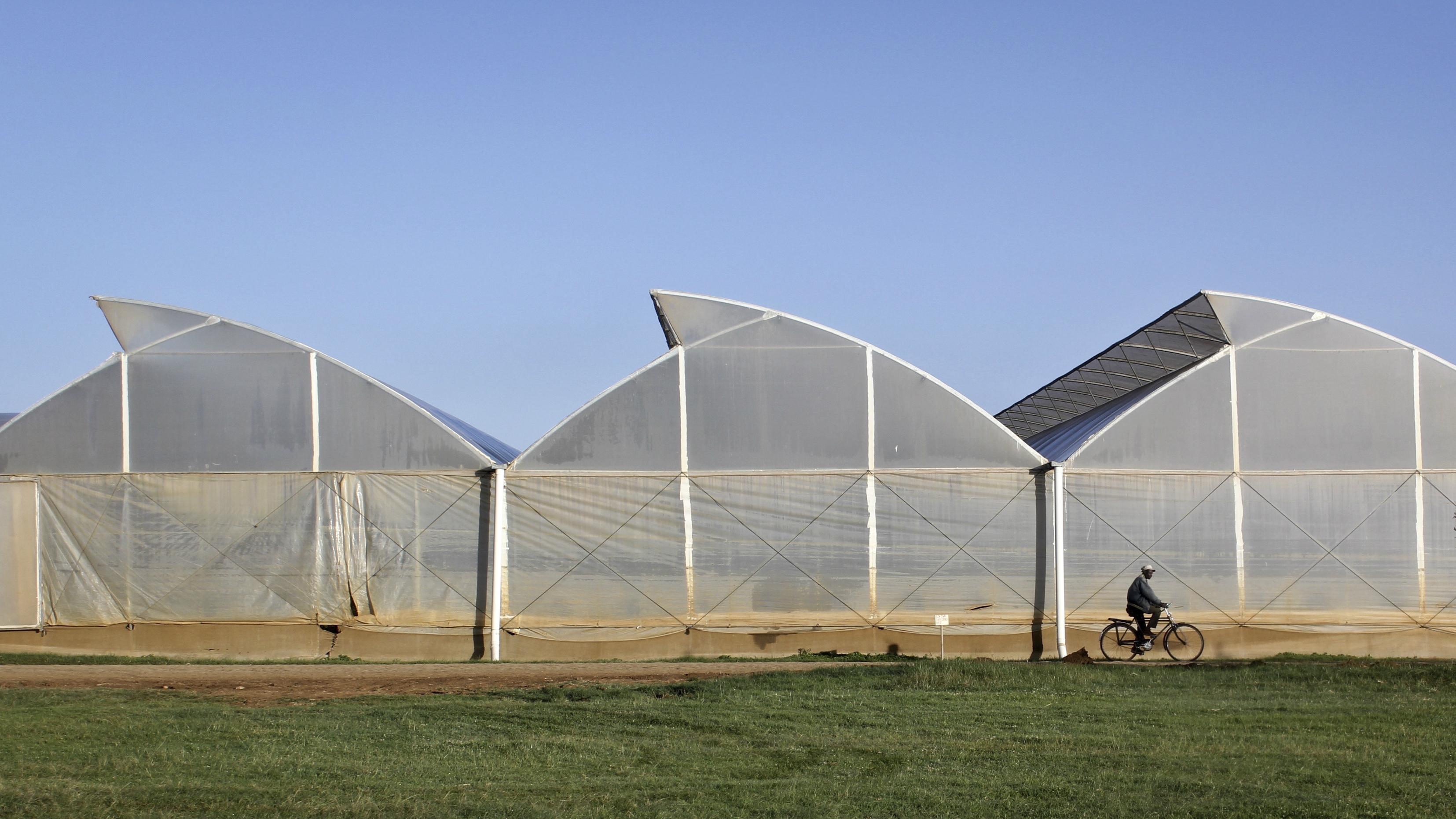 New Greenhouse Technology Can Grow Food And Generate