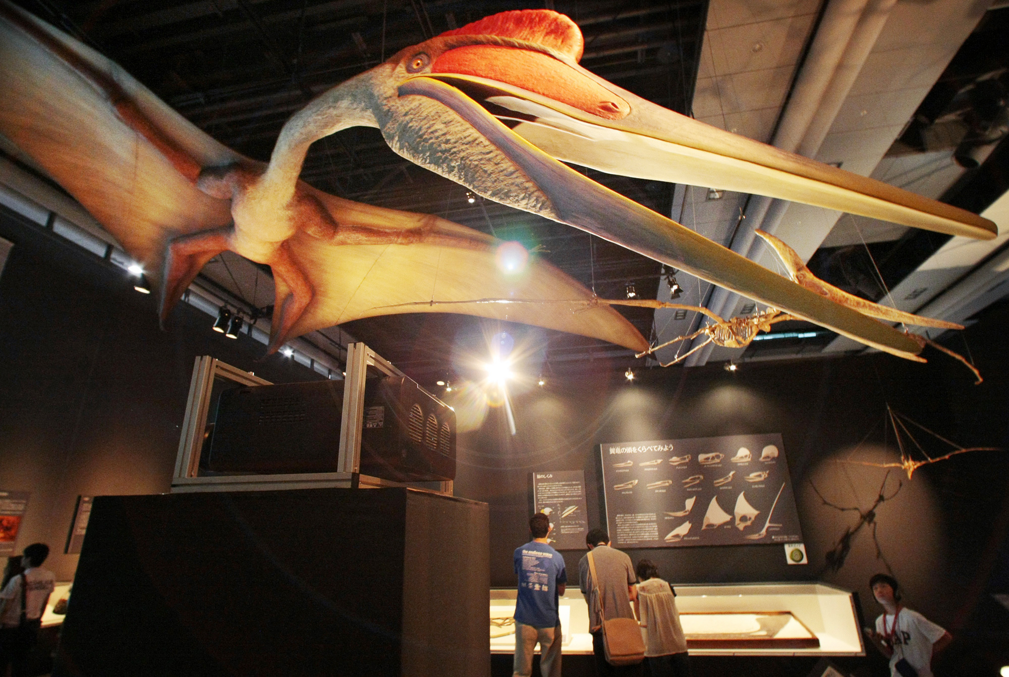 "A visitor looks at a reconstructed biological model of a ""Quetzalcoatlus northropi"" at the ""Pterosaurs; Rulers of the Skies in the Age of Dinosaurs"" exhibition at The National Museum of Emerging Science and Innovation in Tokyo, Saturday, June 28, 2008."
