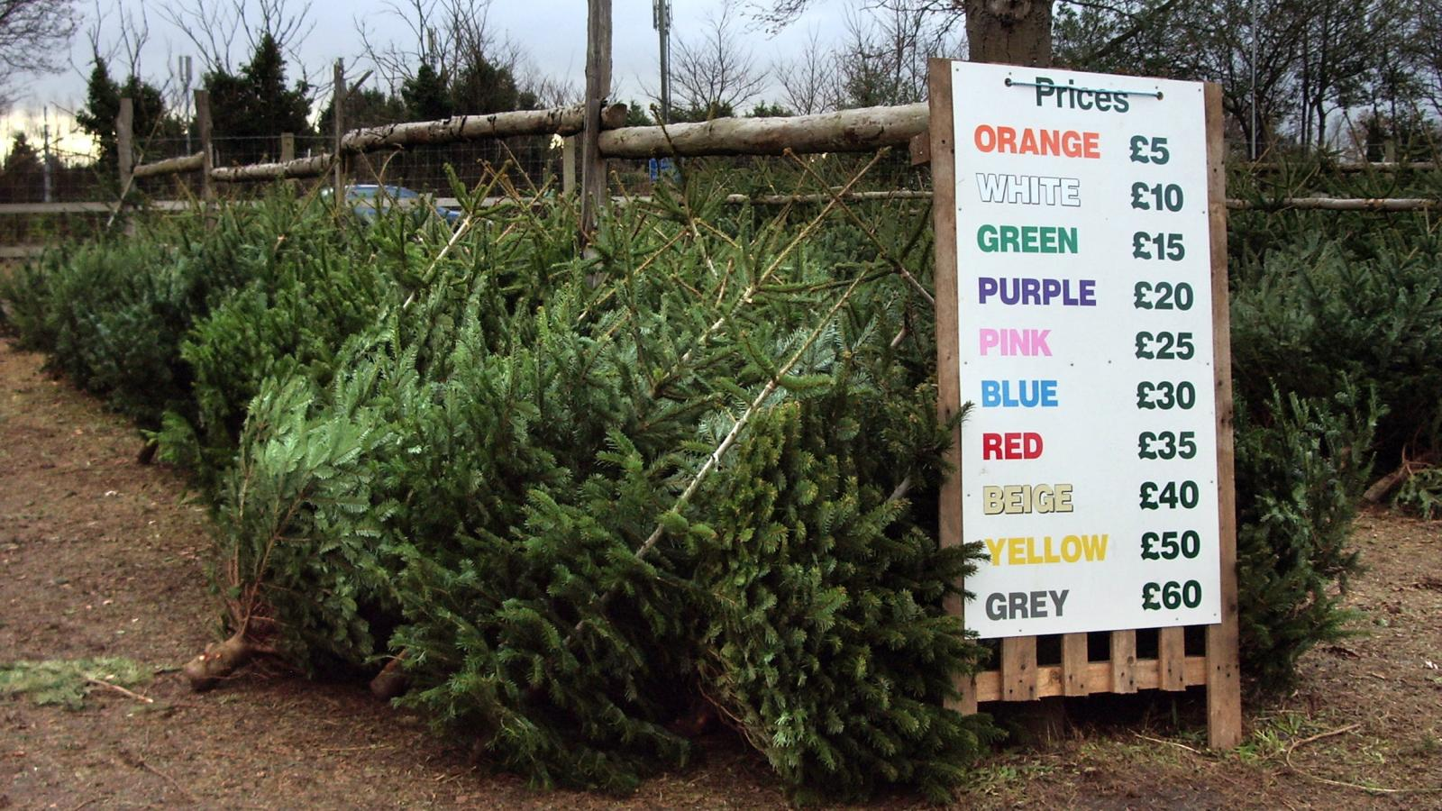 928d67b7f2 Black Friday is the perfect day to buy everything—except a Christmas tree