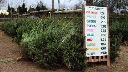black friday is the perfect day to buy everythingexcept a christmas tree - Black Friday Christmas Tree Sale