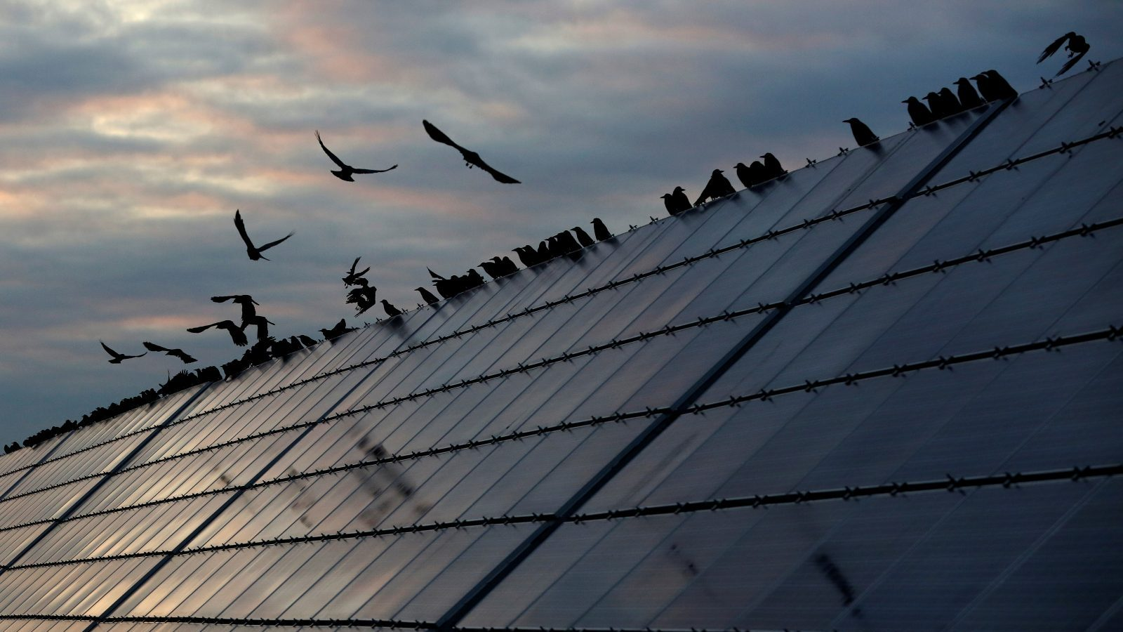 Ravens sit on solar panels at the Abakan solar electric station owned by Russian electricity firm EuroSibEnergo of En+ Group, in a suburb of the Siberian town of Abakan, in the Republic of Khakassia, Russia September 26, 2017. Picture taken September 26, 2017. REUTERS/Ilya Naymushin - RC17CCD05CB0