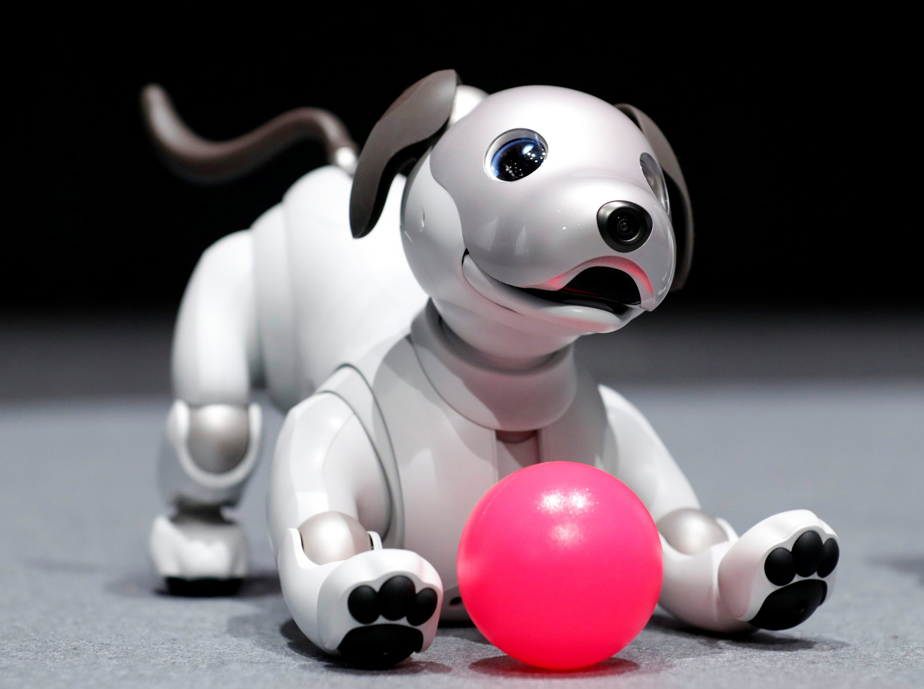 "Sony Corp's entertainment robot ""aibo"" is pictured at its demonstration in Tokyo, Japan November 1, 2017."