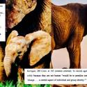ee0cfecac3d Scientists plan to resurrect the woolly mammoth