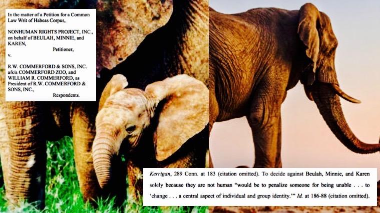 Elephant case collage.