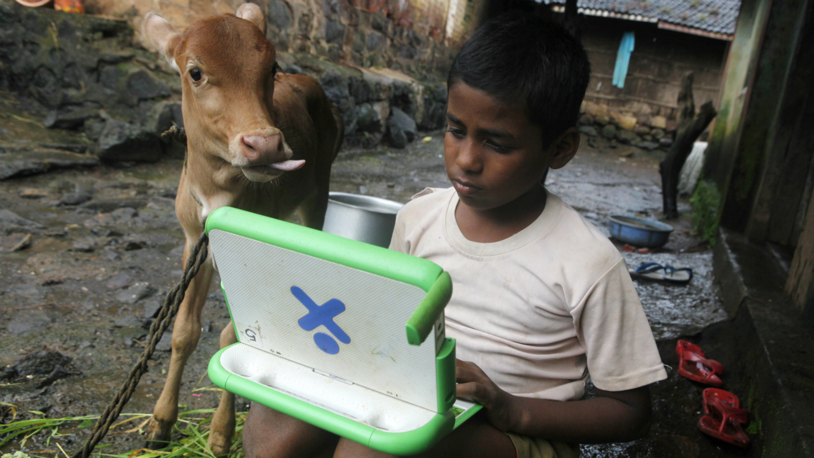 """Harish, 11, a school boy uses a laptop provided under the """"One Laptop Per Child' project by a non-governmental organisation (NGO) as a calf stands next to him, on the eve of International Literacy Day at Khairat village, about 90 km (56 miles) from Mumbai September 7, 2010. International Literacy Day is celebrated each year on September 8."""