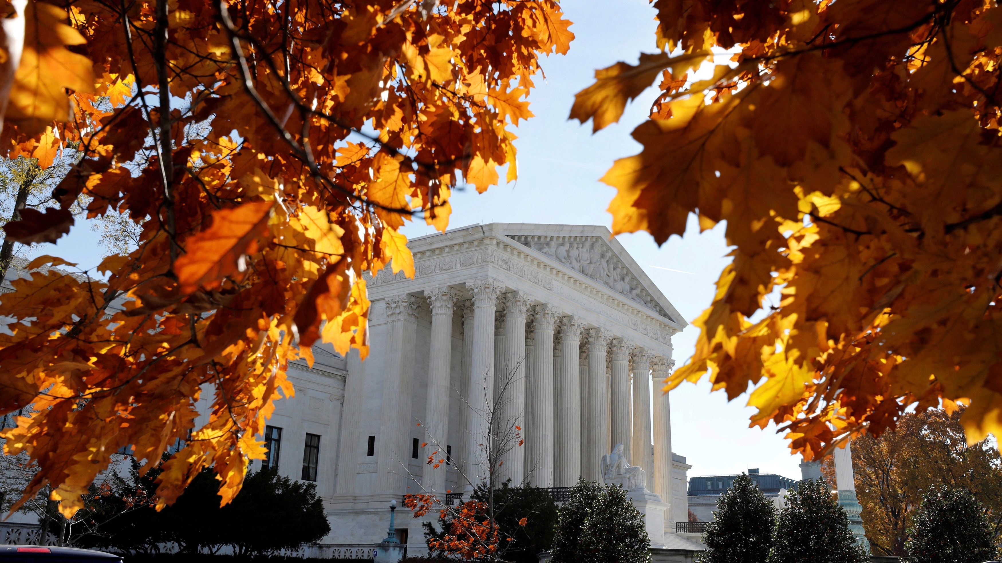Foliage at the Supreme Court.