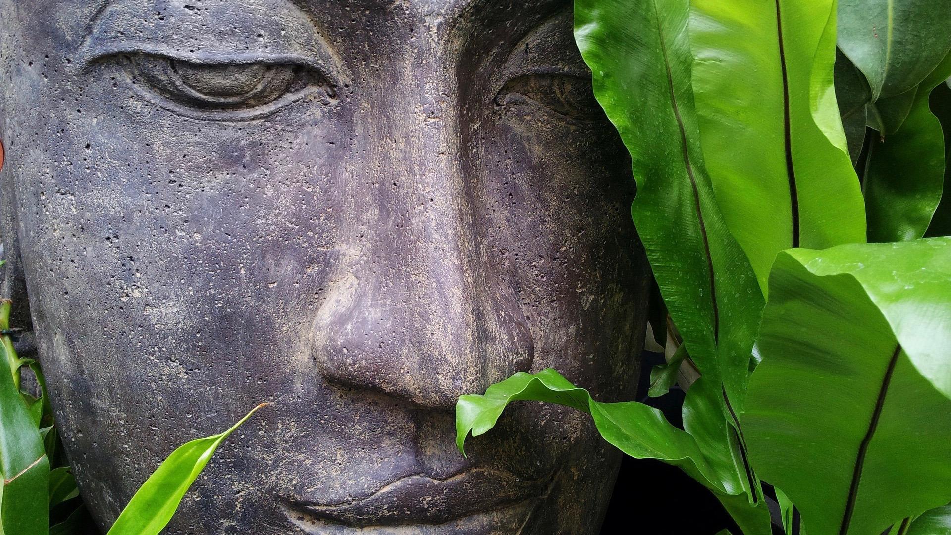 Peeking Buddha.
