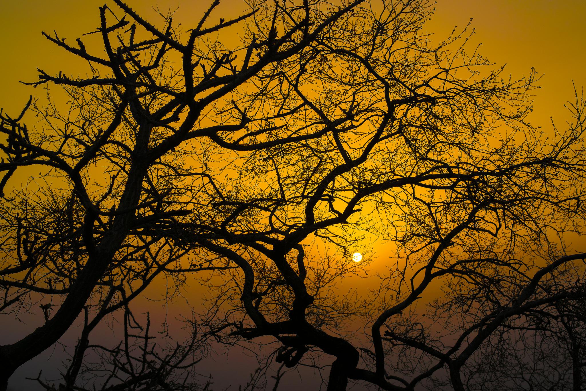 The Trapped Sun by Sankha Chakraborty