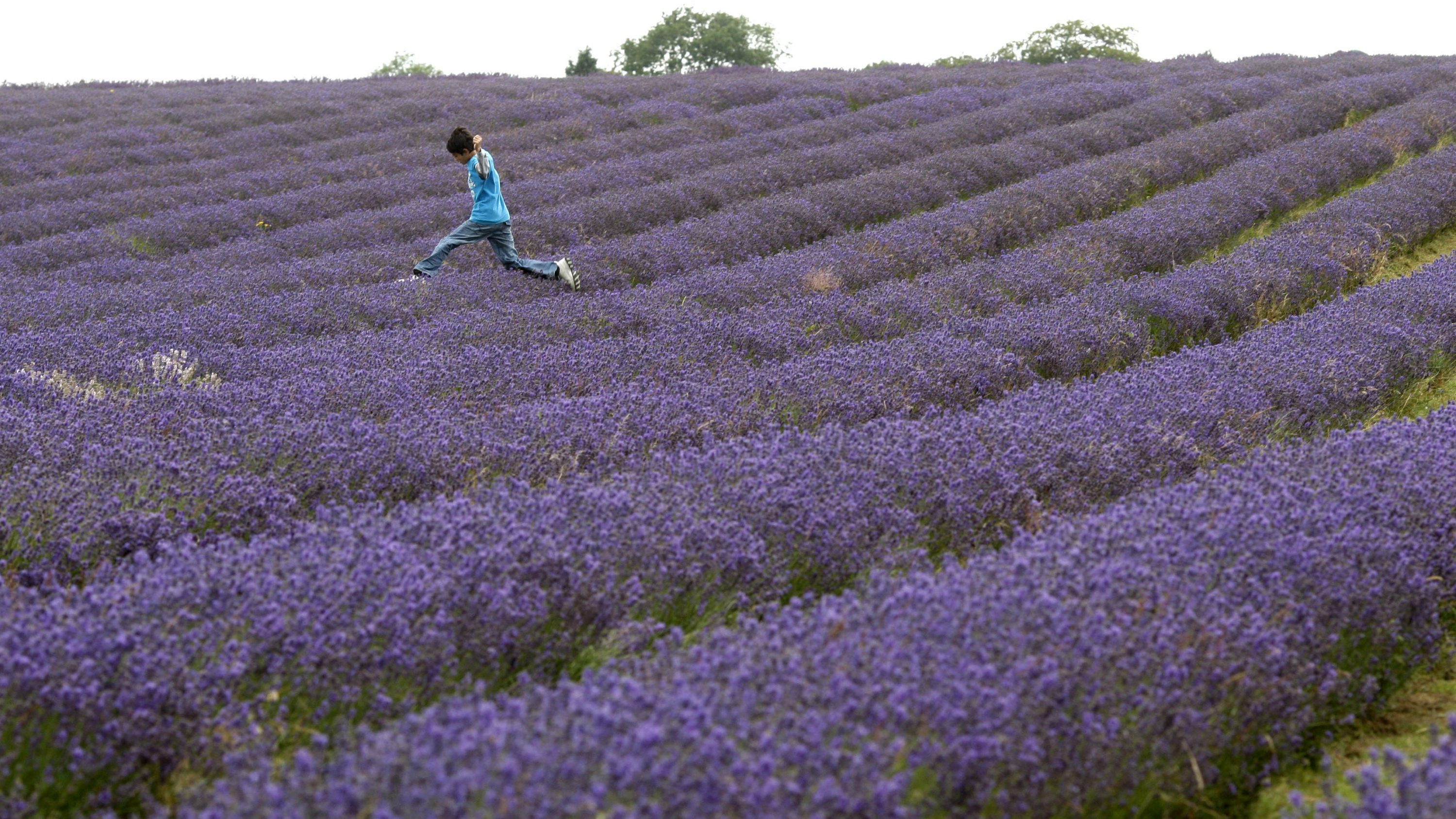 boy jumping over lavender