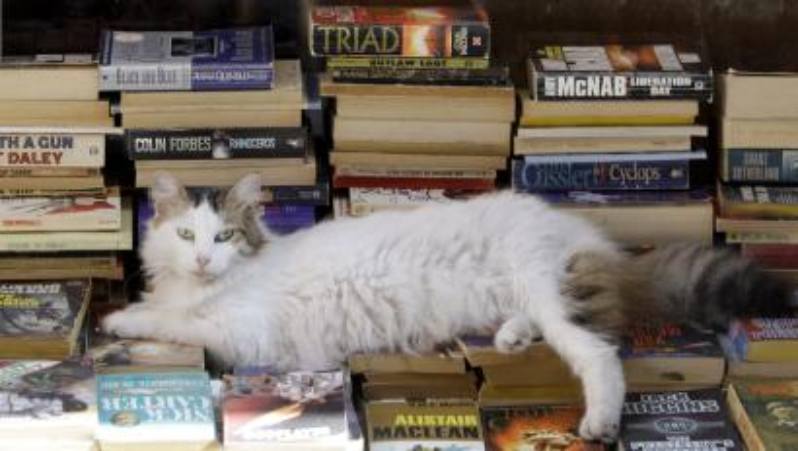 cat literary fiction