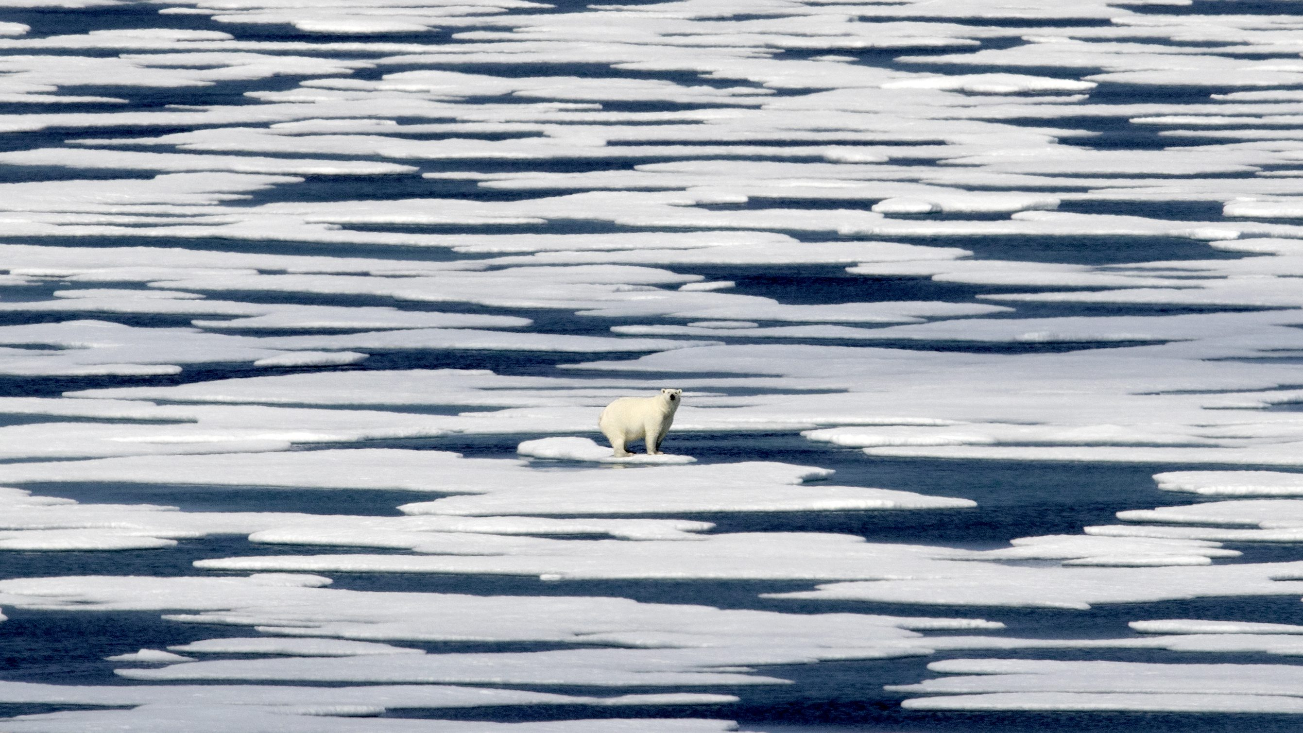 A polar bear stands on broken-up sea ice in the Arctic.