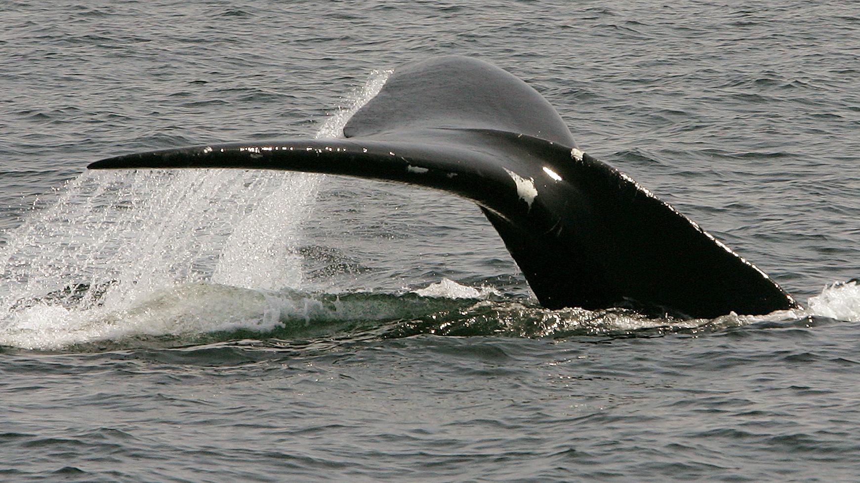 c-whale2-AP_17268597696107