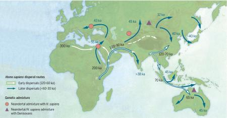 Modern humans dispersed across Asia during the late Pleistocene era.