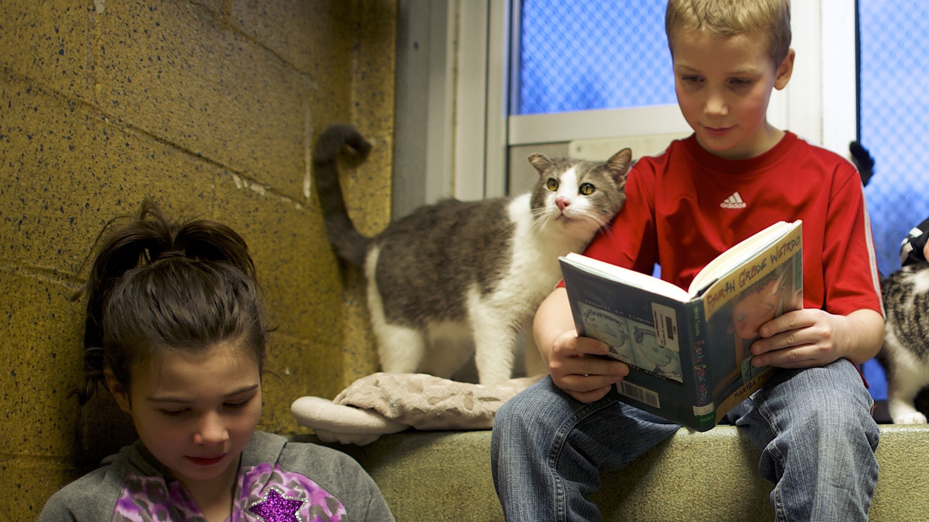 """Kaitlyn Karkoska, Seth Wiggins, and Ethan Wiggins (L-R) read to """"Stewart"""" and """"Tyler,"""" cats up for adoption, as part of """"The Book Buddies Program"""" at the Animal Rescue League of Berks County in Birdsboro, Pennsylvania February 11, 2014. Children in grades 1-8 read to the cats as a way to improve their reading skills and gain confidence. The shelter animals can be a non-evaluative presence that can provide support and comfort to participants without judging them. Students showed sustained focus and maintained a higher state of awareness, as well as improved attitudes toward school, according to researchers at Tufts University. Photo taken February 11, 2014."""