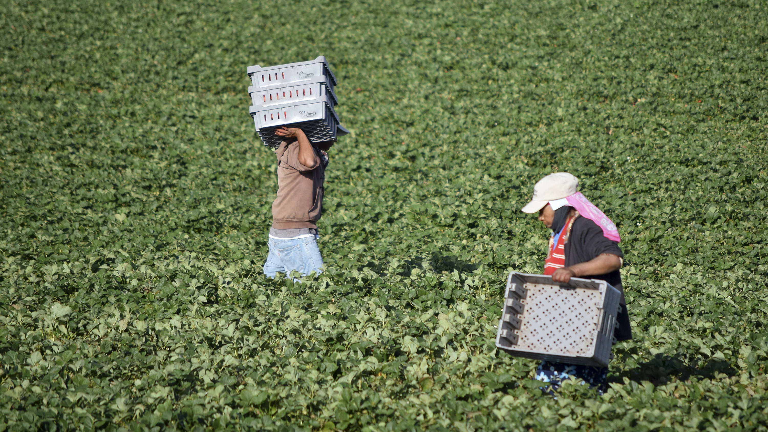 An app could help many farm workers escape death from high temperatures.