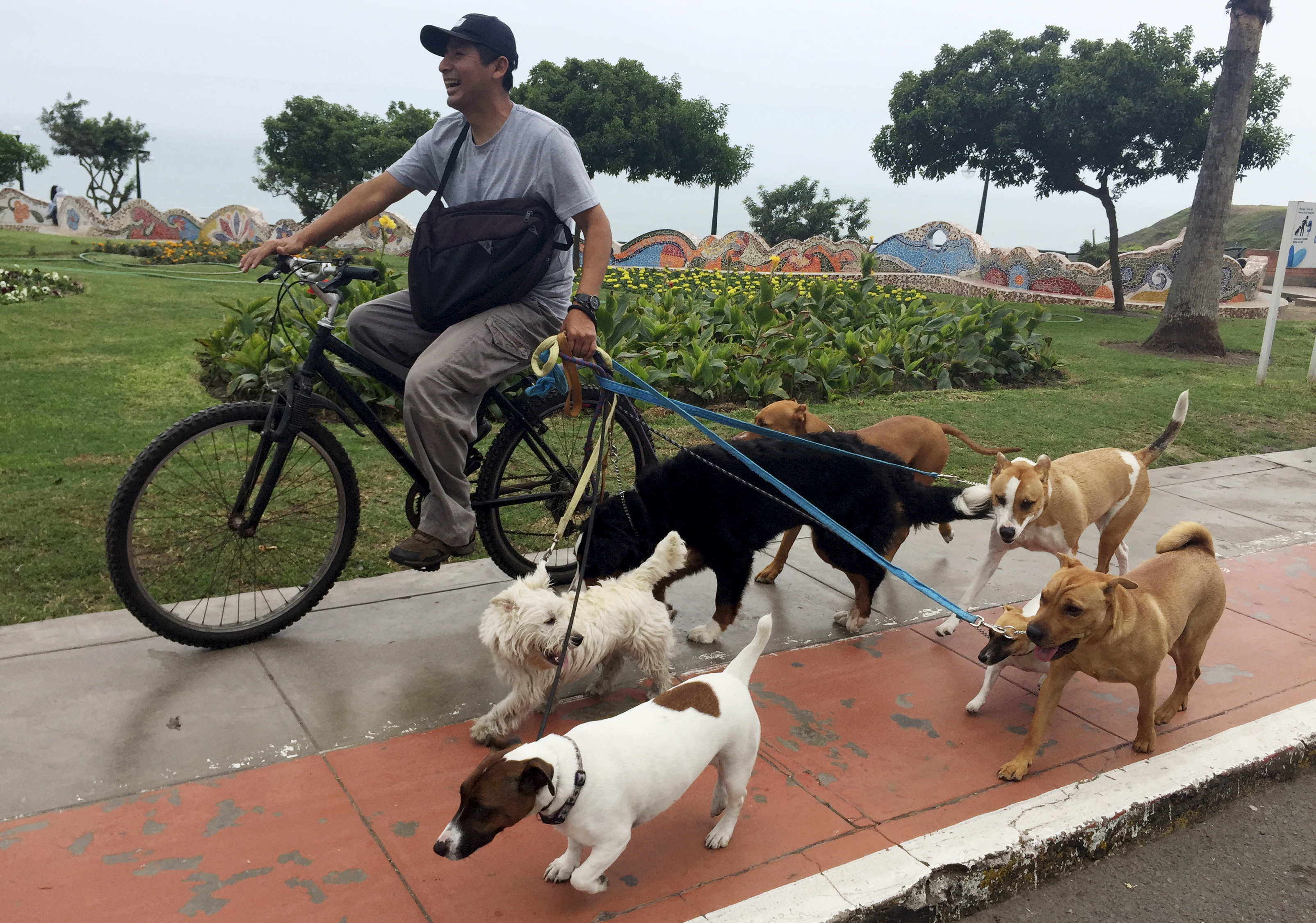 A dog-walker takes dogs out for a walk in a street in Lima's Miraflores district