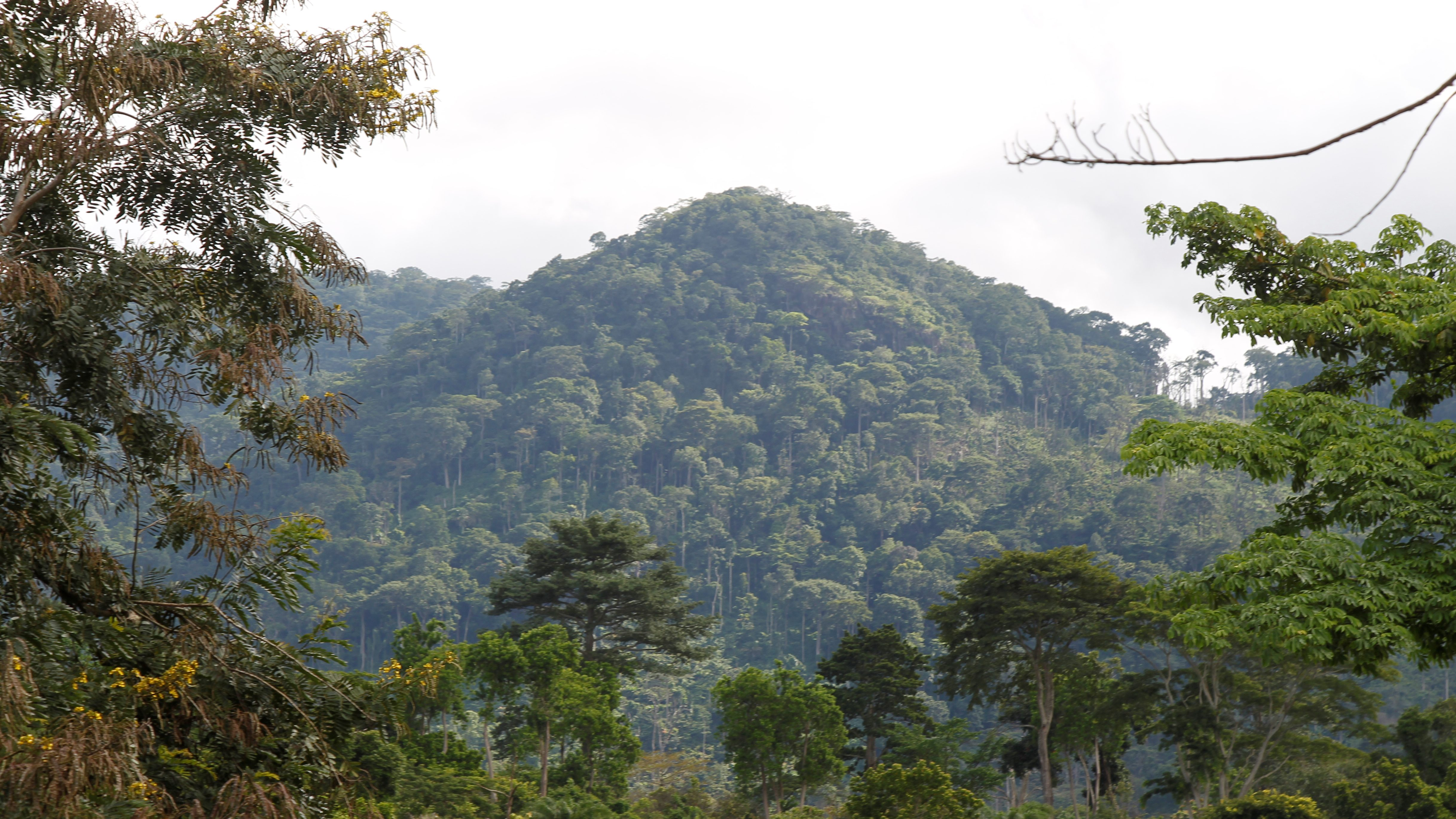 A view of Mont Peko National Park in Duekoue department, western Ivory Coast August 2, 2016.