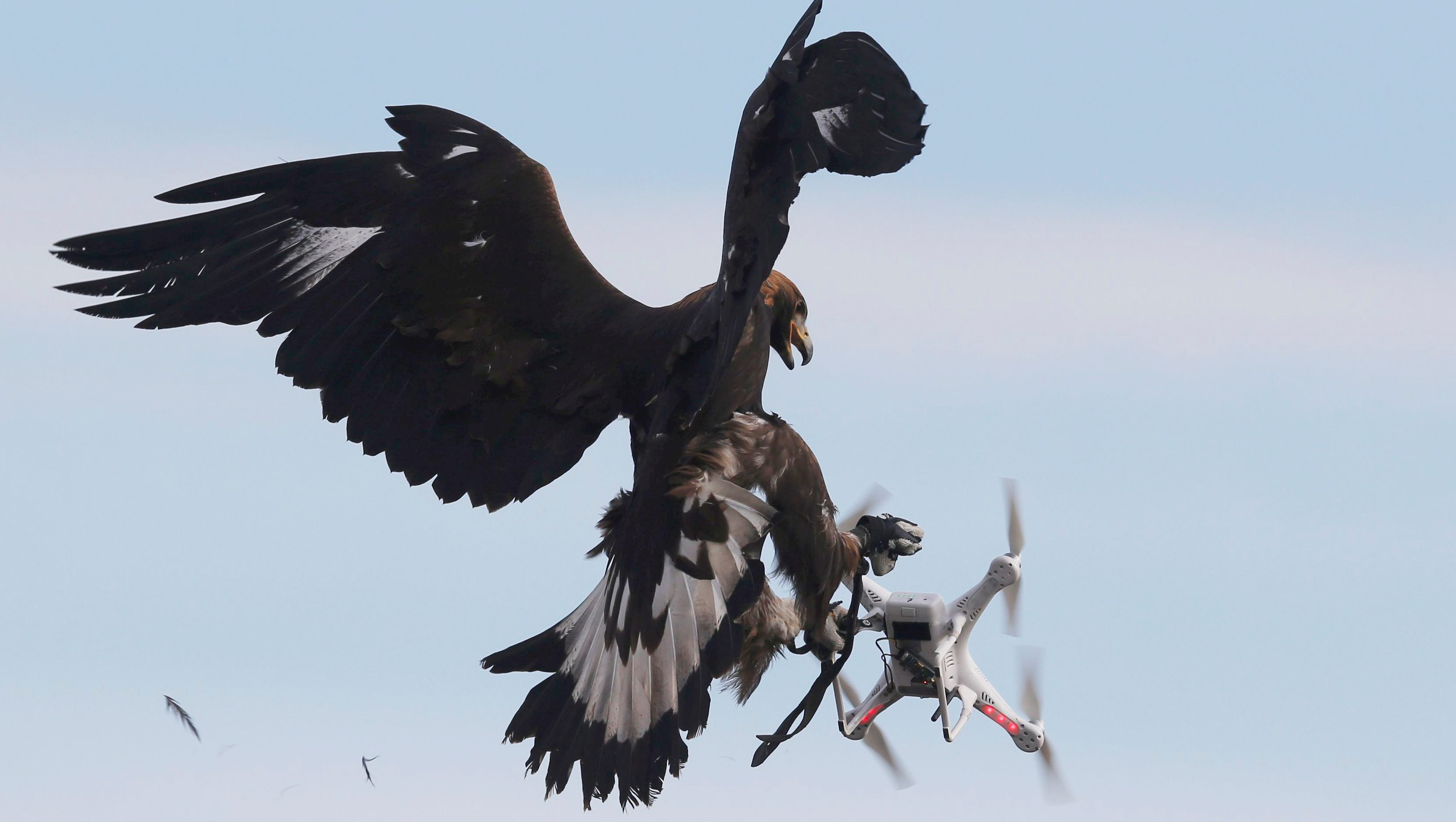 A golden eagle grabs a flying drone during a military training exercise at Mont-de-Marsan French Air Force base, Southwestern France, February 10, 2017.   TPX IMAGES OF THE DAY - RC1D6E43E220