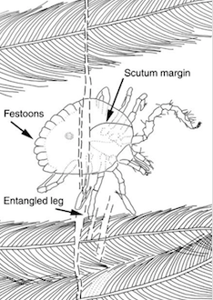 The tick and dinosaur relationship is proven through entanglement.