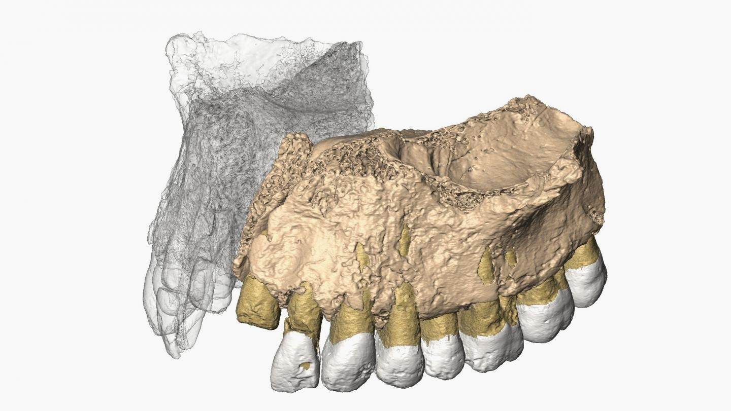 An Ancient Jawbone And Tools In Israel Rewrite The History Of Homo