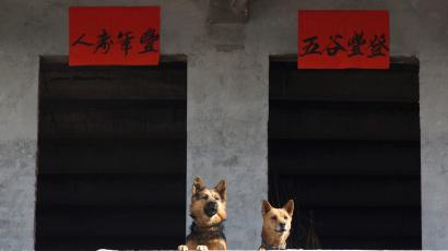 dogs are seen next to lunar new year decorations during a celebration ahead of year of