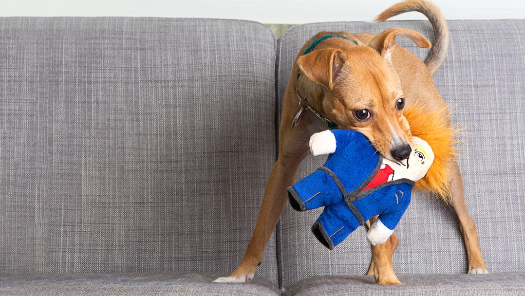 b35539aa How are dog toys are designed: A tour of BARK's design studio and ...